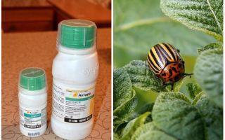 Colorado Patates böceği Aktar anlamına gelir