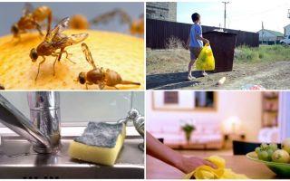 Apartmanda küçük sinekler kurtulmak için nasıl