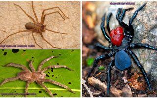 Dünyanın en tehlikeli örümceklerinin tanımı ve fotoğrafları