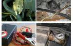 Bir arabanın kaputunun altında sıçan kurtulmak nasıl