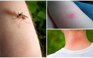 Bir sivrisinek ısırığı ile böcek ya da kene ısırması arasındaki fark nedir?