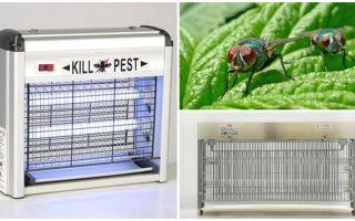 Evde sinekler için bir tuzak nasıl yapılır