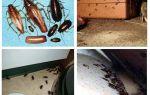 Hamamböceği evde ne görünür, omurgasızlar