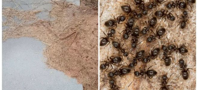 Mezarda karıncalardan nasıl kurtulur