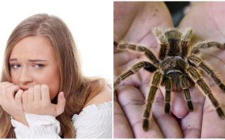 Örümcekler (fobi) korkusunun adı ve tedavi yöntemleri nedir?