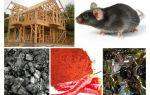 Çerçeve evin farelere karşı korunması