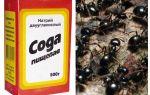 Bahçede karıncalar karşı soda