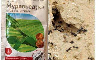Karınca Remedy Anteater talimat ve yorumları