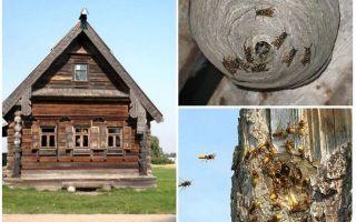 Arıların ahşap evden ve diğer yerlerden nasıl çıkarılacağı