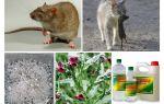 Ahır halk ilaçları fareler nasıl kaldırılır