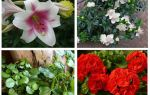 Ne çiçekler köstebek korkutur