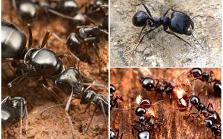 Karıncalar