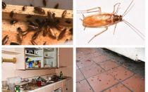 Bir kerede apartmanda hamamböceği kurtulmak