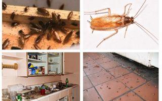 Mutfakta hamamböceği görürseniz ne yapmalısınız?
