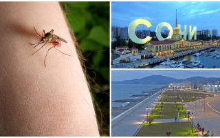 Soçi ve Adler'de sivrisinekler var mı
