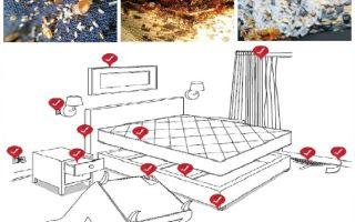 Apartmanda tahtakuruları ile bağımsız olarak nasıl başa