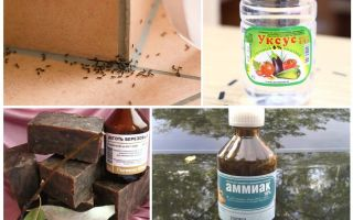 Bir evde ya da apartmanda karıncalar mücadele