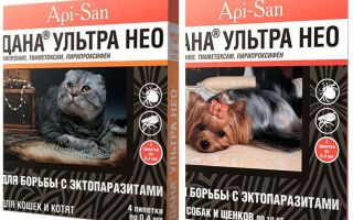 Dana Ultra Neo kediler ve köpekler için pire bırakır