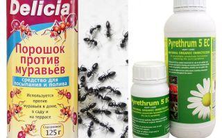Bir apartman veya evde karınca zehiri