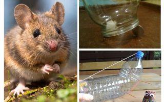 Bir fare kapanı olmadan bir evde bir fare yakalamak nasıl