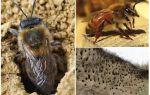 Site arıları topraktan nasıl kaldırılır