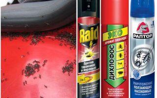Arabadan karıncalar nasıl çıkarılır