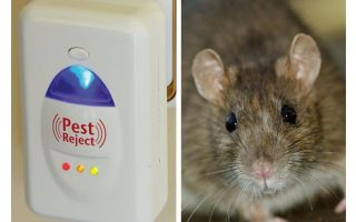 Haşere Redzhekt ultrasonik kovucu kemirgenler ve böcekler