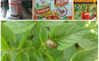 Colorado patates böceğinden en etkili zehirler ve zehirler