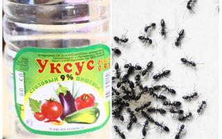 Bahçede karıncalar karşı sirke