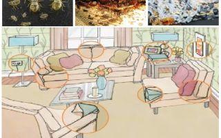 Evde böcek zehirlemek için ne ve nasıl