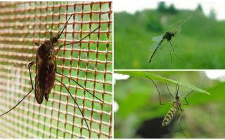 Sivrisinek ve sinekler ne kadar uçar?