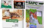 Kediler ve yavru kedi için pire gelen burun damlaları