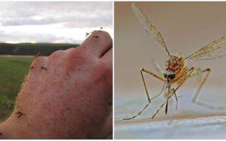 Hangi ülkelerde ve şehirlerde sivrisinek yoktur