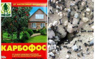 Bahçede karınca antisleri