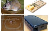 Özel bir evden fareler nasıl kaldırılır