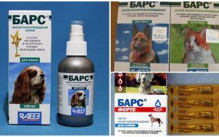 Köpekler ve kediler için kenelere karşı leopar