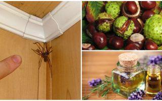 Bir apartman dairesinde veya özel evde örümcekler için metodlar ve araçlar