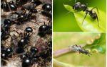 Rusya ve dünyadaki karınca türleri