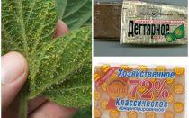 Bitkiler üzerinde bitkilerden gelen katran ve ev sabunu
