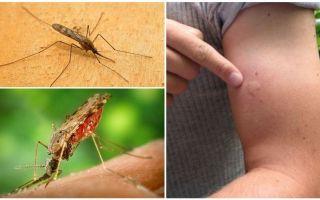 Bir anofel sivrisinek tarafından ısırılırsa ne yapmalısınız?