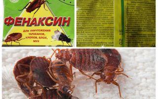 Bedbugs gelen toz Phenaxin