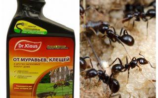 Klaus karınca ve kenelerden