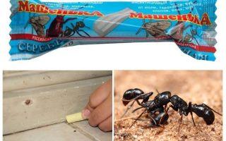 Karıncalardan Kalem Masha