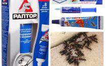 En iyi karınca ürünleri