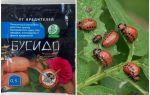Bushido Colorado patates böceği için çare: kullanım, etkinlik, yorumlar için talimatlar