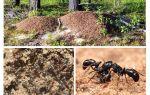 Cihaz karınca yuvası