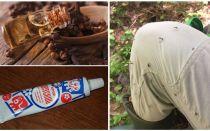 Sivrisinekler için halk ilaçları