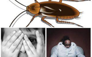 İnsanlar neden hamamböceğinden korkar?