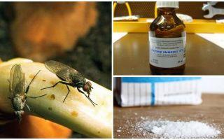Soğan sineklerinden nasıl kurtulur