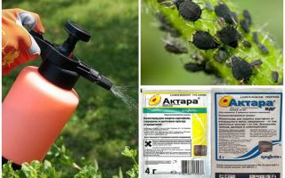 Aktara aphids karşı